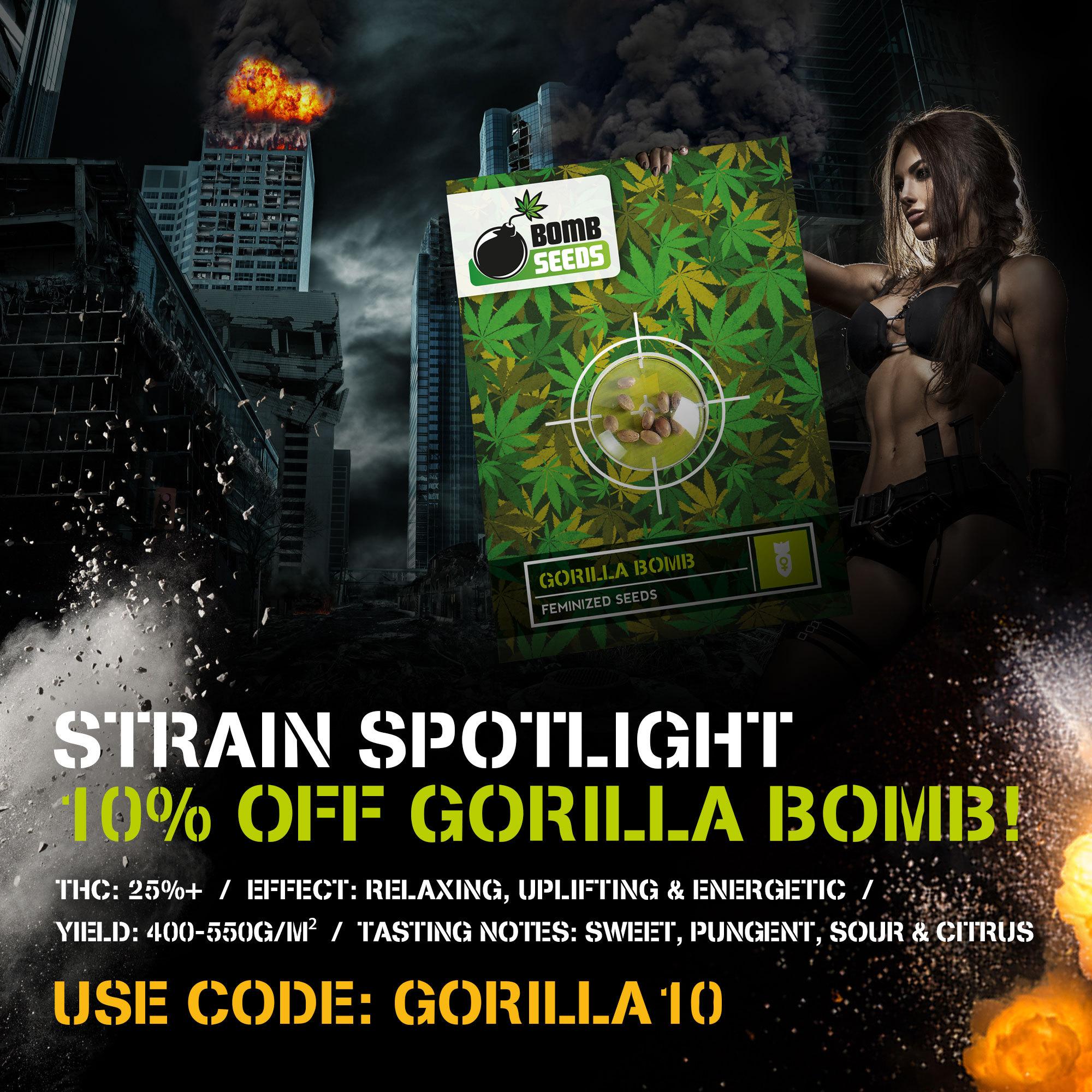 Strain Spotlight